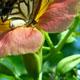 Summer flower & summer butterfly